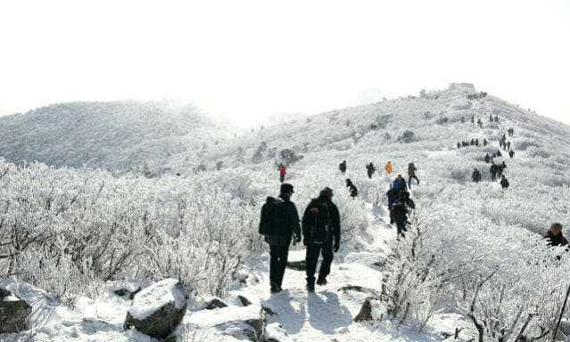 Unique Things To Do For Every Season In Korea