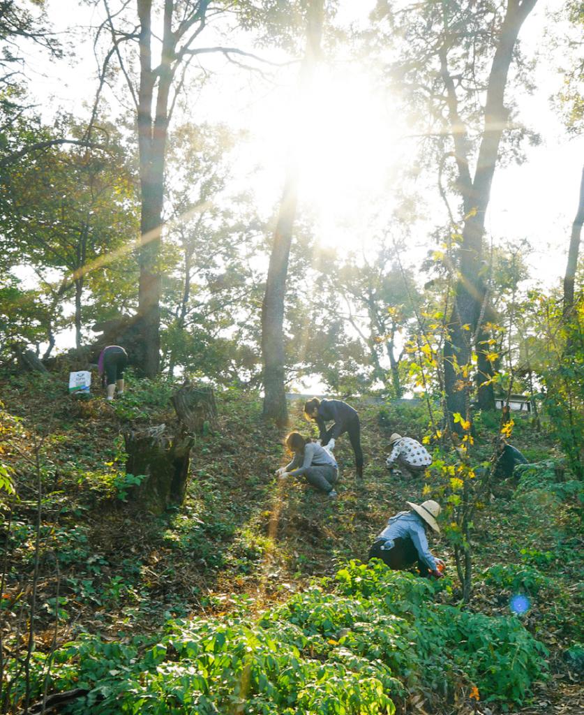 Farmping Experience with Yoon Ssam 8