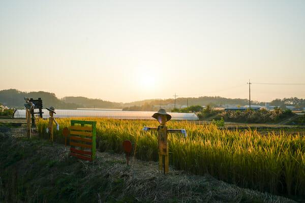 Farmping Experience with Yoon Ssam 5