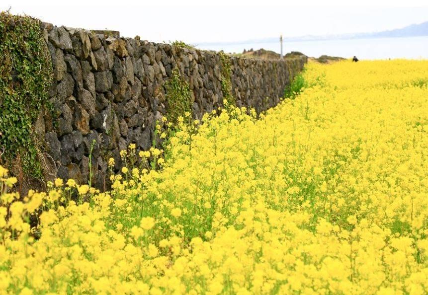 Jeju Island a.ka. the Hawaii of Korea - Places You Must Visit on Jeju Island 10