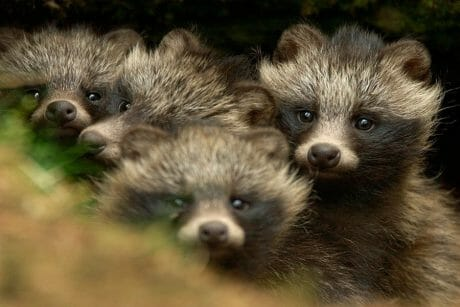 5 Cute and Unique Animals in Korea That You Need to Know! 13