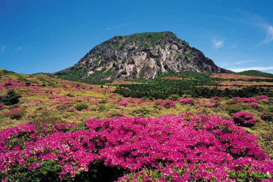 Jeju Island a.ka. the Hawaii of Korea - Places You Must Visit on Jeju Island 2