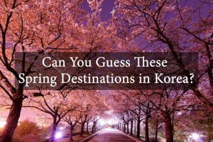 Can You Guess These Spring Destinations in Korea? 349